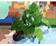 El agua , Plantas y Algas