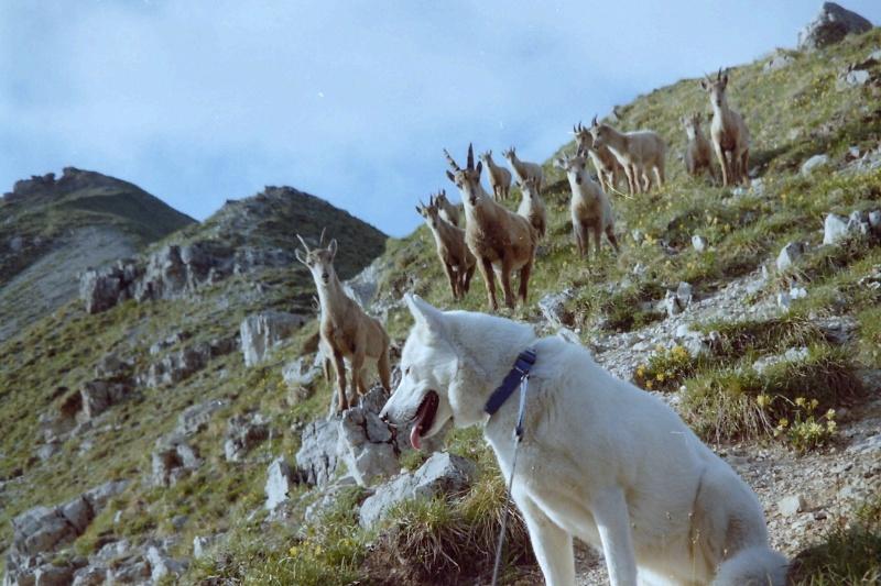 Rencontres avec des animaux sauvages Pict0045