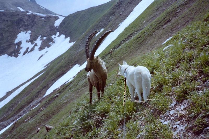 Rencontres avec des animaux sauvages Pict0046