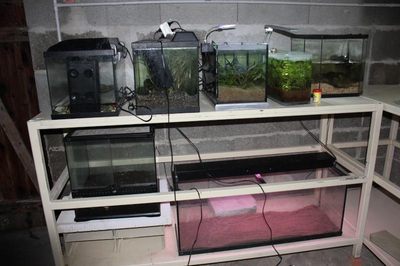 Ma fishroom a moi Img_5110