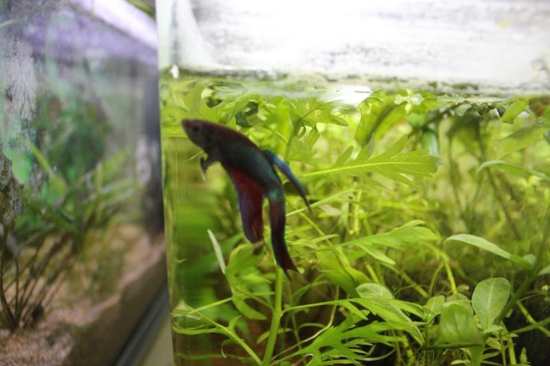 Ma fishroom a moi Img_5112