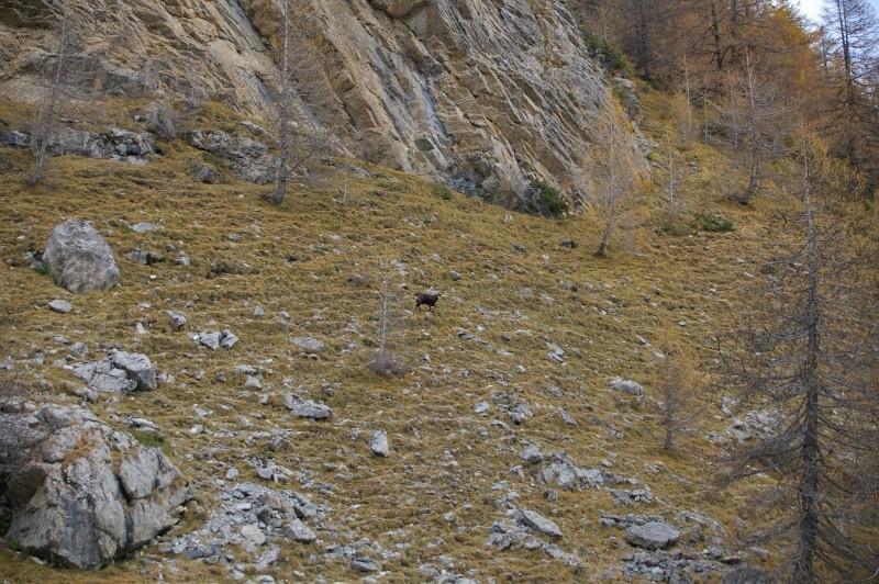 Les Alpes de Haute Provence, Barcelonnette, parc du mercantour 14_nov11