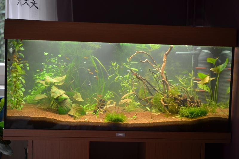 Aquarium 180L Juwel (MAJ 20 mai 2015) Dsc_0057