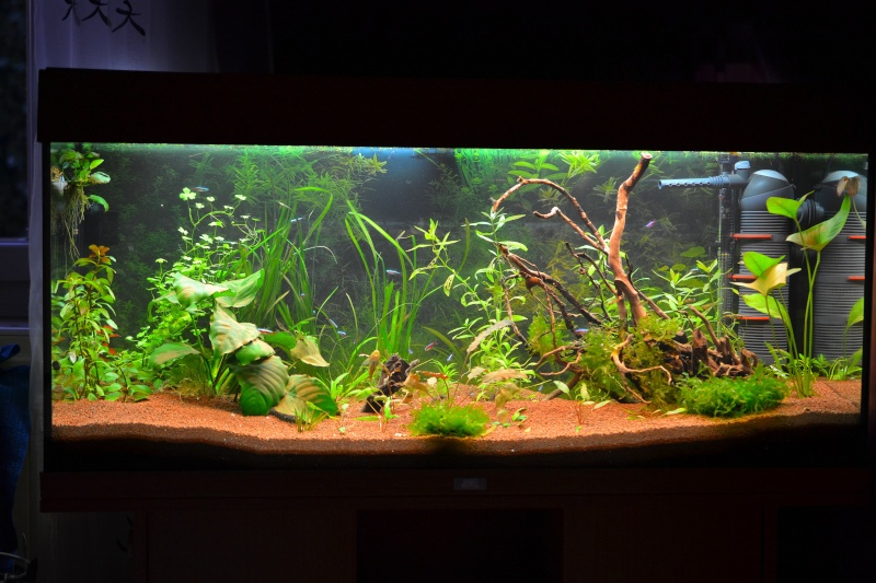 Aquarium 180L Juwel (MAJ 20 mai 2015) Dsc_0071