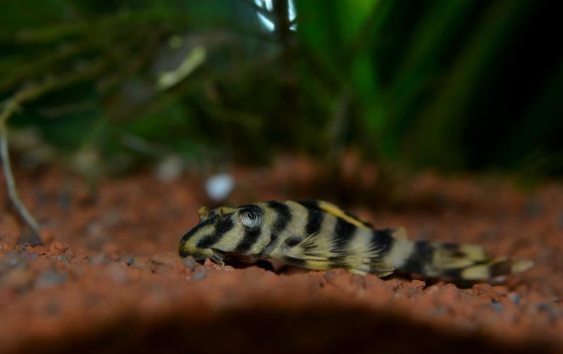 Aquarium 180L Juwel (MAJ 20 mai 2015) Dsc_0077