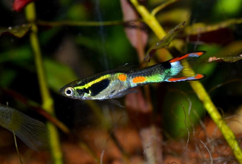 Aquarium 180L Juwel (MAJ 20 mai 2015) - Page 6 Dsc_0436