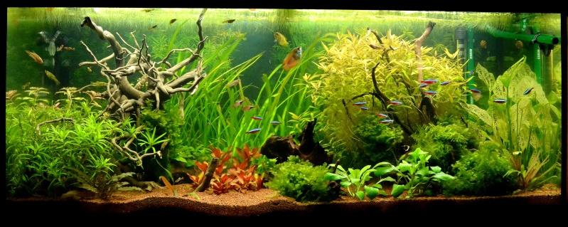 Aquarium 180L Juwel (MAJ 20 mai 2015) - Page 6 Dsc_0447