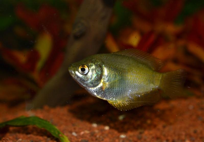 Aquarium 180L Juwel (MAJ 20 mai 2015) - Page 6 Dsc_0452