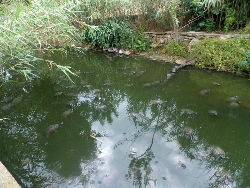 Sigean et Vallée des tortues Dscn0015