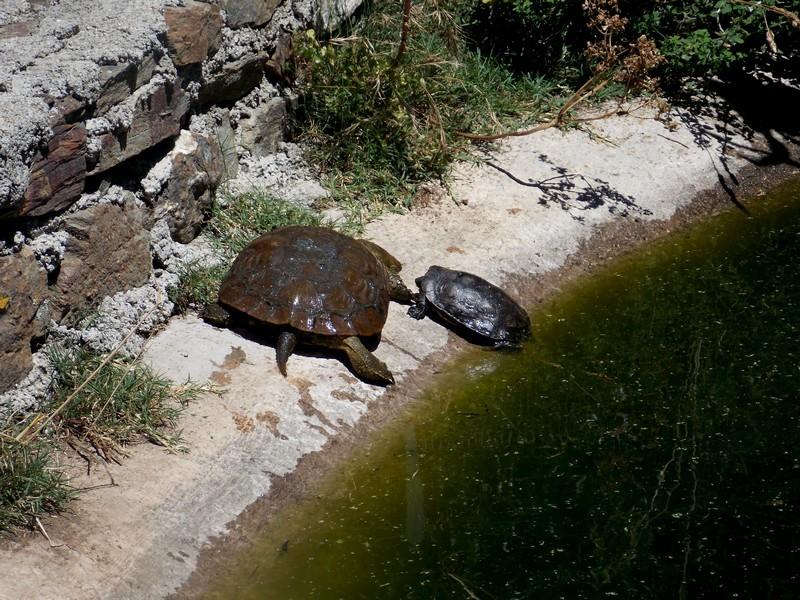 Sigean et Vallée des tortues Dscn0018