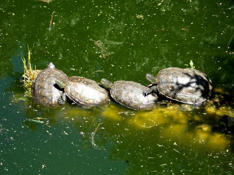 Sigean et Vallée des tortues Dscn0116