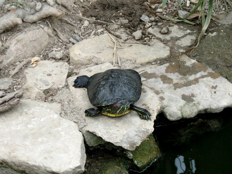 Sigean et Vallée des tortues Img_0210