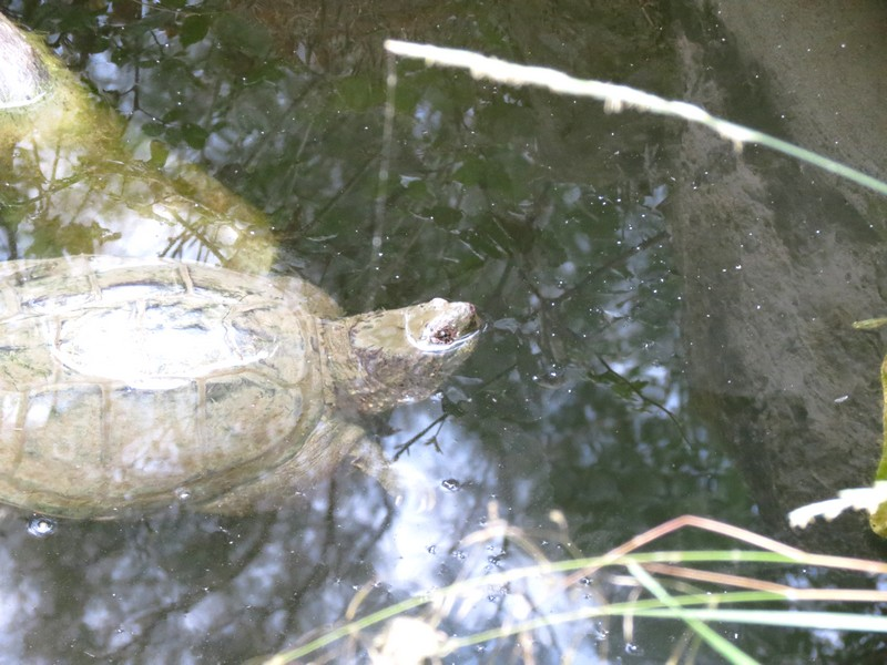 Sigean et Vallée des tortues Img_0314
