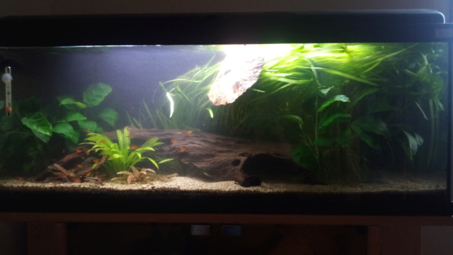 Le nouveau départ de mon aquarium - Page 3 P_202012