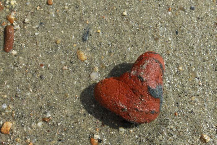 Sur la plage abandonnée.... Caillo10
