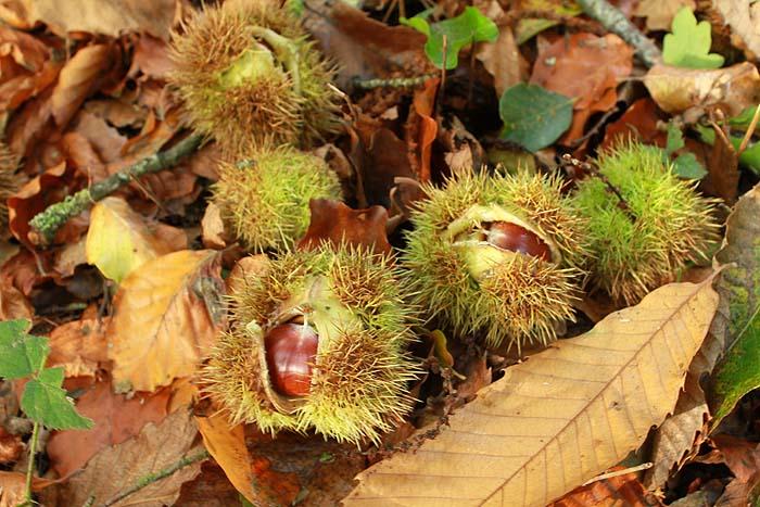 Fruits de saison Canal_10