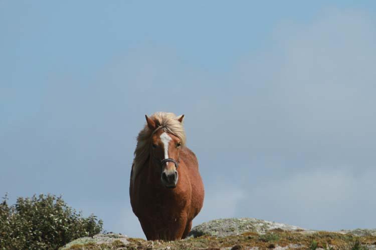 J'ai rencontré le cheval de Cam-Louis, Côte des Sables... Cheval10
