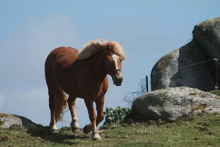 J'ai rencontré le cheval de Cam-Louis, Côte des Sables... Cheval11