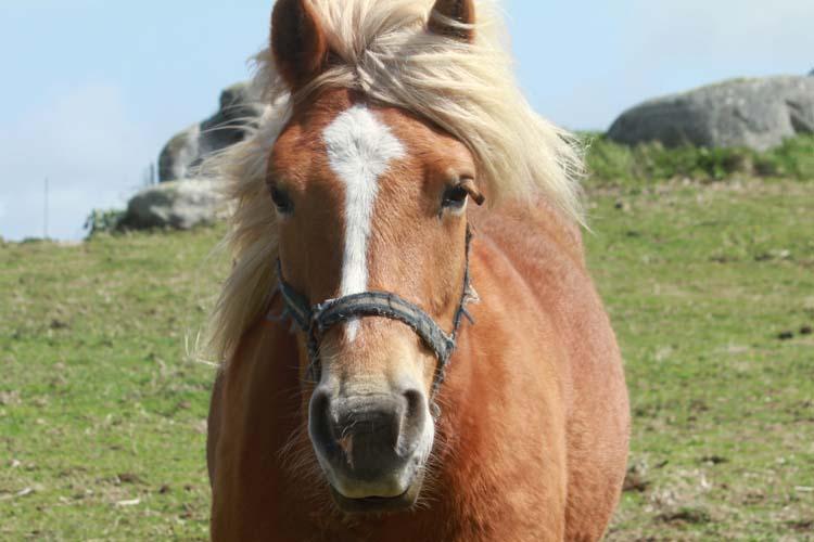 J'ai rencontré le cheval de Cam-Louis, Côte des Sables... Cheval12