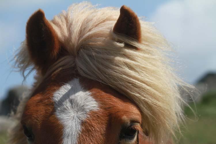 J'ai rencontré le cheval de Cam-Louis, Côte des Sables... Cheval14