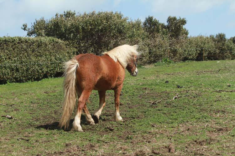J'ai rencontré le cheval de Cam-Louis, Côte des Sables... Cheval15