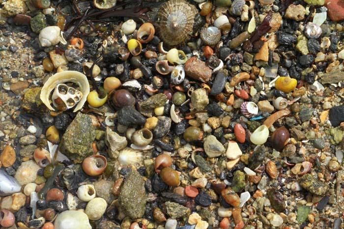 Sur la plage abandonnée.... Coquil10