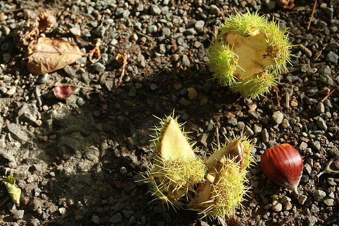 Fruits de saison Vilain22