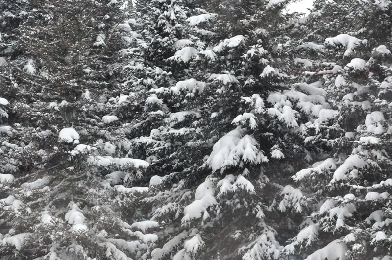 Renault UE capturé (Mirage Hobby, 1/35). neige, armes et début des figurines Srb_1253