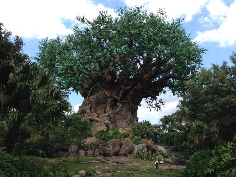 TR d'un voyage fabuleux à Walt Disney World!! - Page 5 Img_0113