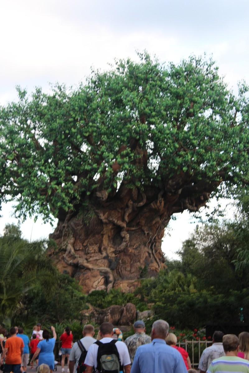 TR d'un voyage fabuleux à Walt Disney World!! - Page 2 Img_3711