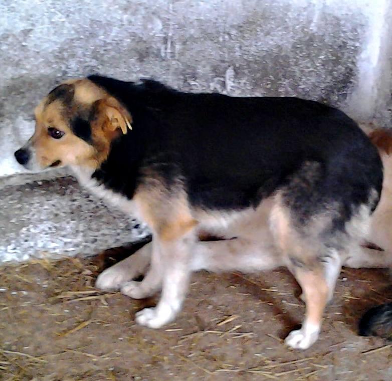 PEGASE, M-X, taille petite, né 2010 (Pascani) - Pris en charge Association 4 Pattes sans toit 10168110