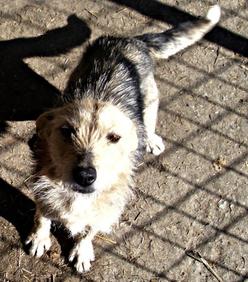 Aider les chiens de Roumanie 14718810