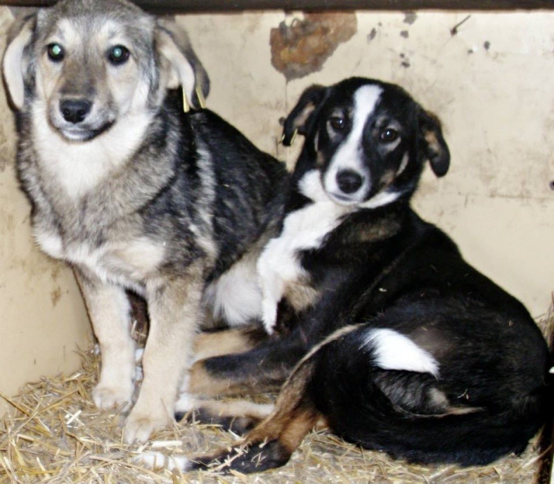 Aider les chiens de Roumanie Licorn10