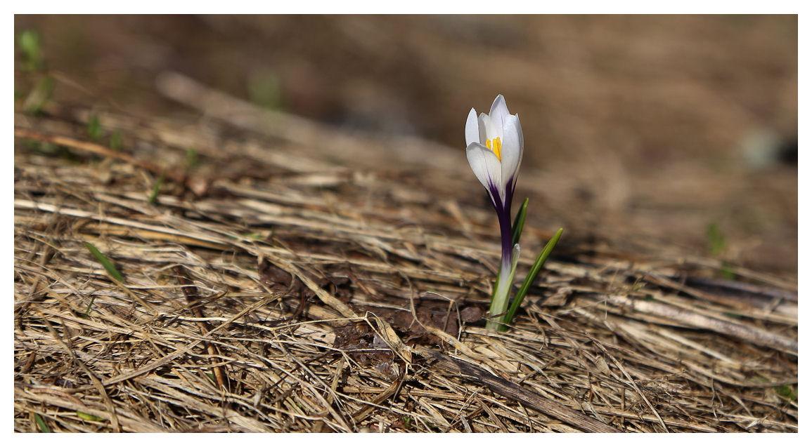 V'là  l'printemps ! (+2) First10