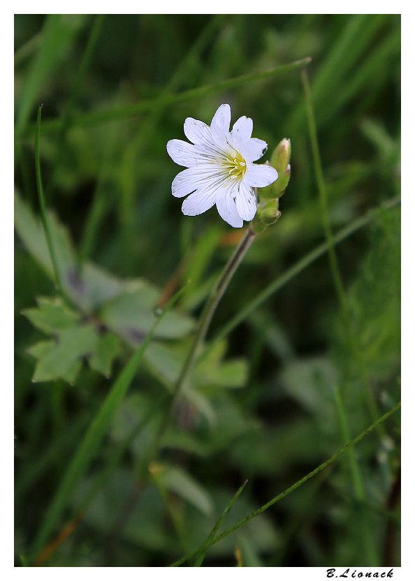 Au jardin entre deux averses Fleur010