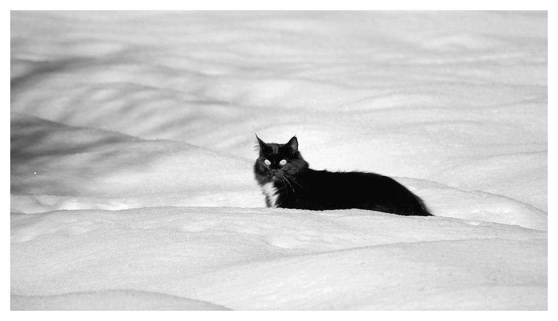 Snowcat Snowca10