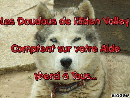 URGENCE chiens à placer  L EDEN VALLEY.ASSOCIATION (26) 38222110