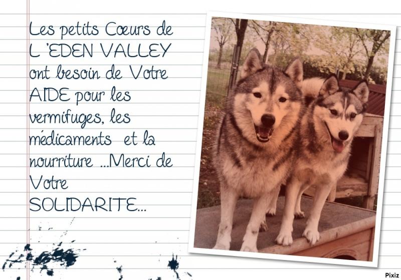 URGENCE chiens à placer  L EDEN VALLEY.ASSOCIATION (26) 72c90c10