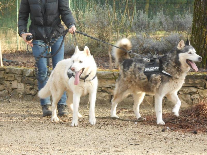 Orca, Husky, âgée de 14 ans née 20 Décembre 2000,  Eden Valley  ASSO39 - Page 3 Orca_e10