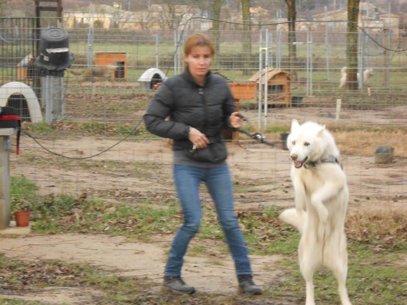 Orca, Husky, âgée de 14 ans née 20 Décembre 2000,  Eden Valley  ASSO39 - Page 3 Orca_l10