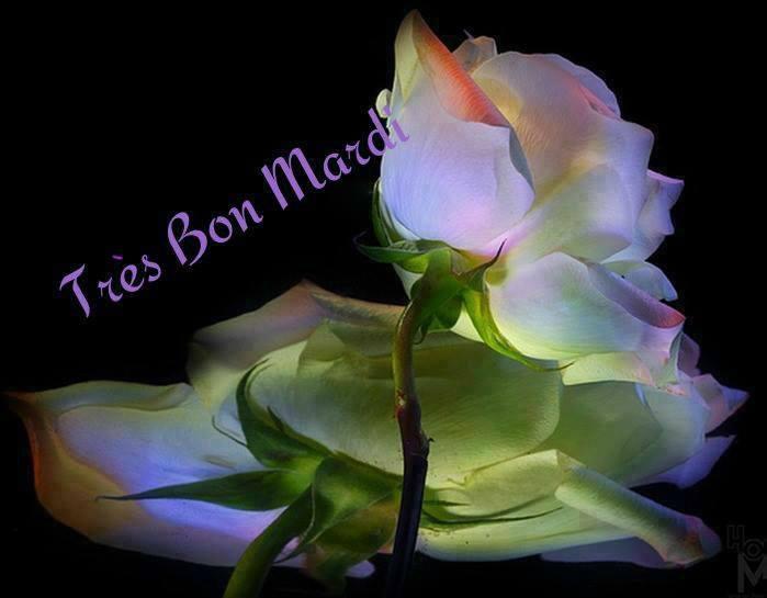 Bon Mardi 15125010
