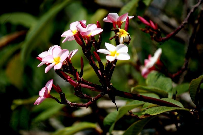 ดอกไม้2คอน Img_3514