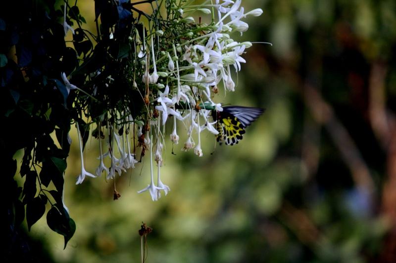 ดอกไม้2คอน Img_3617