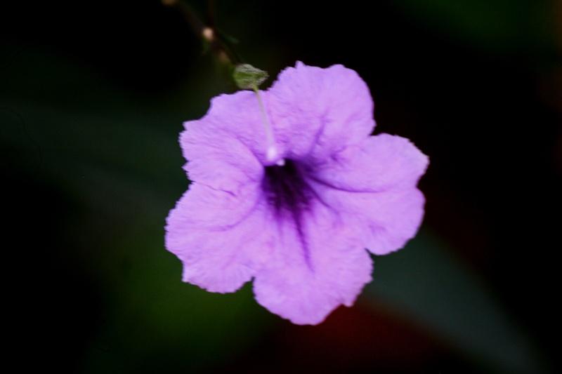 ดอกอะไร Img_4325