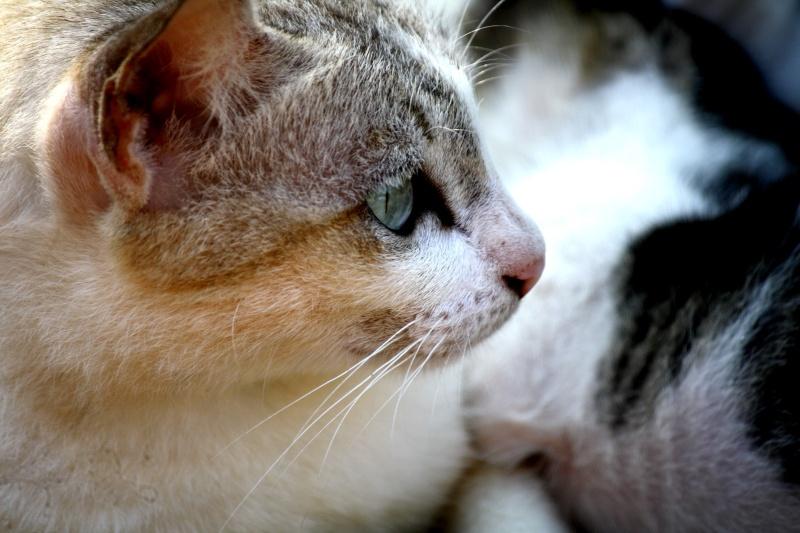 แมว Img_6817