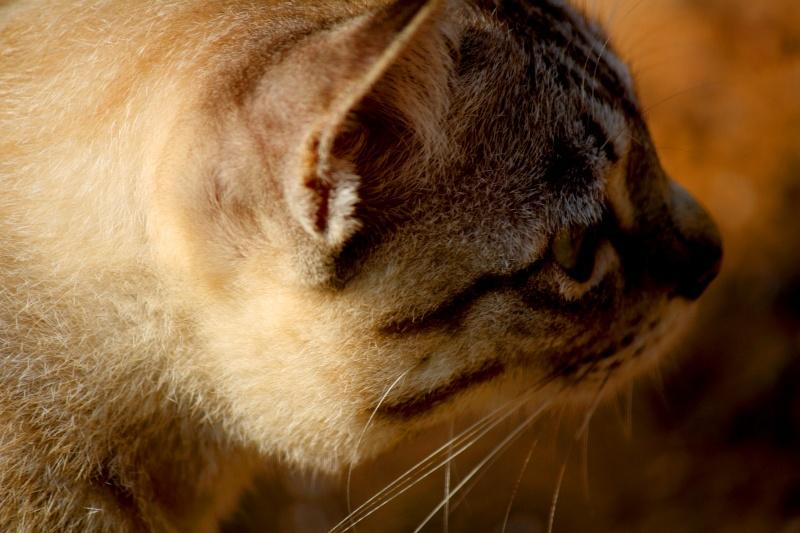 แมว Img_6818