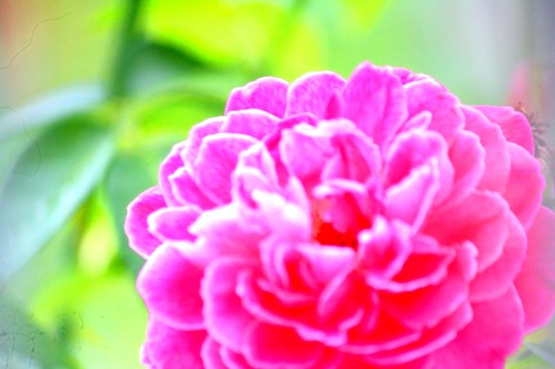 ดอกไม้บ้านญาติ Img_7415