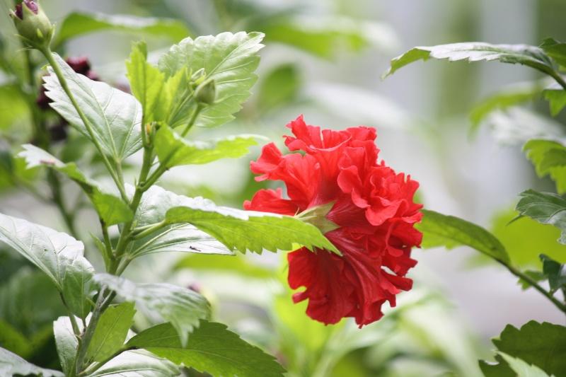 ดอกไม้บ้านญาติ Img_7417