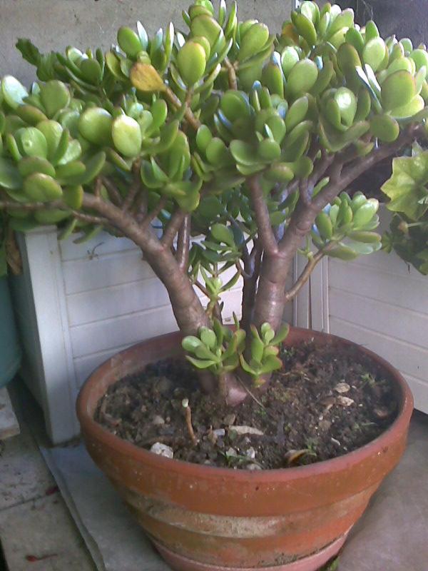 amateurs de cactus et plantes ?  - Page 3 Photo010