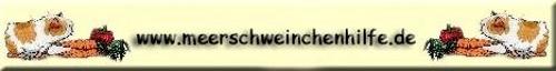 meerschweinchenhilfe.de